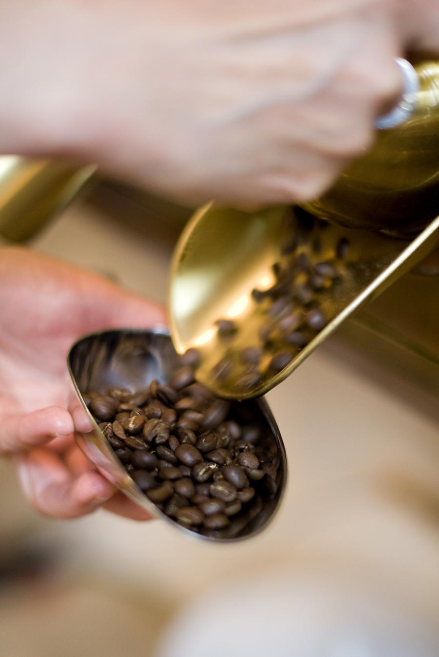 kaffee-roesterei-kaffeebaum